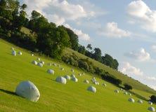 Campo y cielo de la naturaleza Fotos de archivo libres de regalías