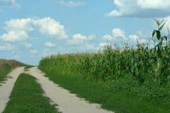 Campo y cielo de maíz Fotos de archivo