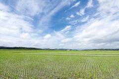 Campo y cielo de ocsilación del arroz Imagen de archivo