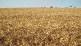 Campo y cielo de trigo almacen de video