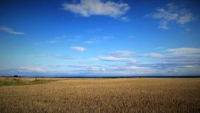 Campo y cielo de trigo Imágenes de archivo libres de regalías