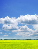 Campo y cielo del verano Imágenes de archivo libres de regalías