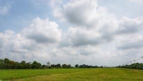 Campo y cielo, opinión del arroz del paisaje imagen de archivo