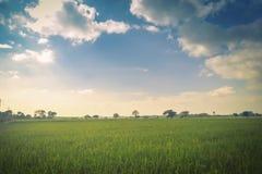 Campo y cielo verdes del arroz imágenes de archivo libres de regalías