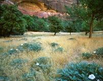 Campo y flores fotografía de archivo