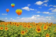 Campo y globo del girasol Foto de archivo libre de regalías