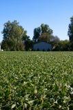 Campo y granero de la soja fotos de archivo