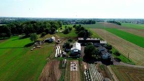 Campo y granja de Amish del abejón