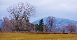 Campo y línea de árboles en invierno imagenes de archivo