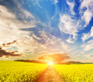 Campo y la manera del país hacia el sol Fotografía de archivo libre de regalías