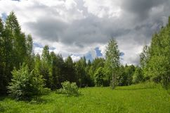 Campo y madera Foto de archivo libre de regalías