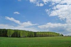 Campo y madera en la distancia Fotos de archivo
