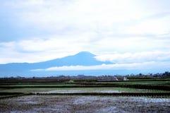 Campo y montaña de arroz Imágenes de archivo libres de regalías
