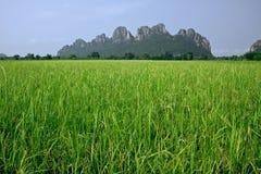 Campo y montaña de arroz Imagen de archivo libre de regalías