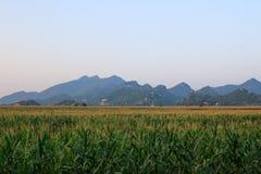 Campo y montaña de maíz Foto de archivo