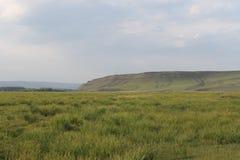 Campo y montañas verdes Foto de archivo libre de regalías