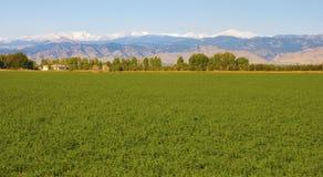 Campo y montañas verdes claros fotos de archivo