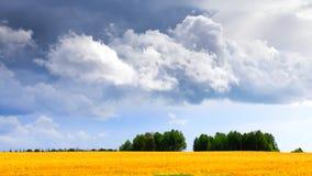 Campo y nubes de trigo imágenes de archivo libres de regalías