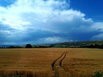 Campo y nubes de trigo Fotos de archivo libres de regalías
