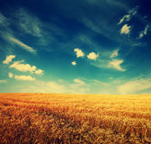 Campo y nubes de trigo en el cielo Imagen de archivo