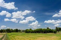 Campo y nubes del arroz Fotos de archivo libres de regalías