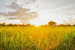 Campo y puesta del sol verdes Foto de archivo