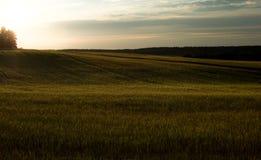 Campo y puesta del sol verdes Composición de la tubería del campo Colores naturales a Fotografía de archivo