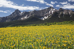 Campo y San amarillos Juan Mountains, Mesa del oído de las mulas de Hastings, cerca del rancho pasado del dólar, Ridgway, Colorad Fotos de archivo libres de regalías