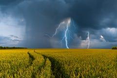 Campo y tempestad de truenos grandes de trigo Fotos de archivo