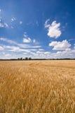 Campo y un cielo hermoso Fotos de archivo