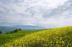 Campo y volcán el Etna del resorte Imágenes de archivo libres de regalías