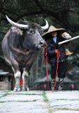 Camponês chinês com gado da exploração agrícola Fotos de Stock Royalty Free