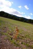 Camponês em um campo com ancinho Foto de Stock Royalty Free