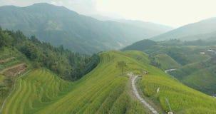 Camponês que vai ao longo dos campos Terraced do arroz de Longji filme