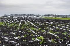Campos agrícolas cobertos pela primeira neve em Ucrânia na estação outonal atrasada Fotografia de Stock Royalty Free