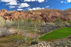 Campos agrícolas do vale de Marrocos Dades Imagem de Stock