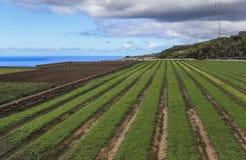 Campos agrícolas em Tenerife Imagem de Stock