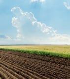 Campos agrícolas y cielo azul Foto de archivo libre de regalías
