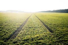 Campos agriculturais O tempo de mola… aumentou as folhas, fundo natural Traços na terra do trator Por do sol fotos de stock royalty free