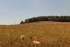 Campos amarelando e moinhos de vento distantes imagens de stock royalty free