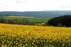 Campos amarelos foto de stock royalty free