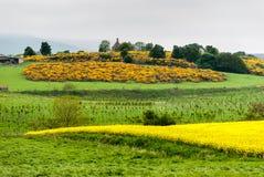 Campos amarelos de Escócia fotografia de stock royalty free