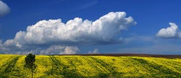 Campos amarelos de uma paisagem amarelo-azul ucraniana tradicional e céu azul com nuvens fotografia de stock