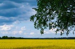 Campos amarelos de uma paisagem amarelo-azul ucraniana tradicional e c?u azul com nuvens fotografia de stock