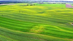 Campos amarelos e verdes da violação no Polônia, vista aérea, Polônia vídeos de arquivo