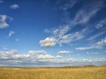 Campos amarelos sob um céu azul dramático com as nuvens brancas próximas a colônia do grego clássico de Histria, nas costas do Ma imagens de stock royalty free
