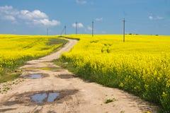 Campos amarillos Imagenes de archivo