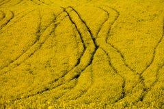 Campos amarillos Fotografía de archivo libre de regalías