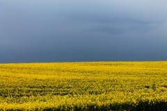 Campos amarillos Foto de archivo