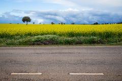 Campos amarillos Foto de archivo libre de regalías